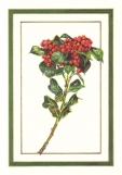 Yaupon Holly Christmas Card